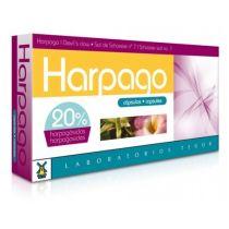 HARPAGO 40CAP